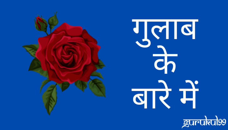 About Rose in Hindi